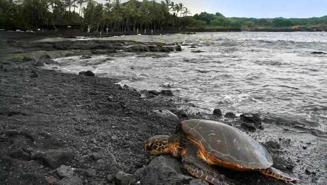 Пуналулу бийч, Хавай