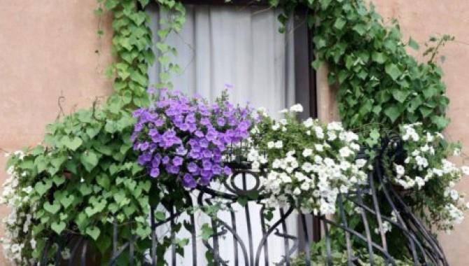 1. Озеленяване на балкона. Това е най-популярният начин на озеленяване, когато балконът е малък. -609_1