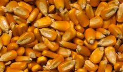 България ще внесе 200 хиляди тона царевица от Украйна през февруари