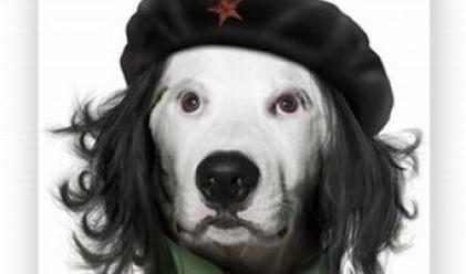 Британска фирма превърна Че Гевара в куче