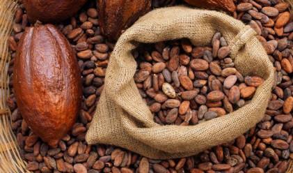 Цената на какаото може да скочи до нивата от 1979 г.