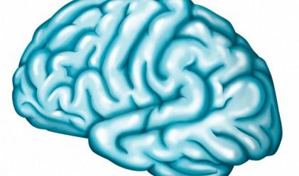 Лявата или дясната половина на мозъка си използвате повече?