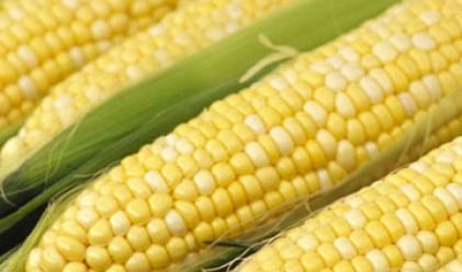 Царевицата и пшеницата поевтиняват