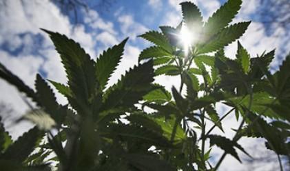 Миризма на марихуана в полския парламент
