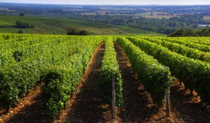 Земеделските земи – един сегмент на пазара, който не познава кризата