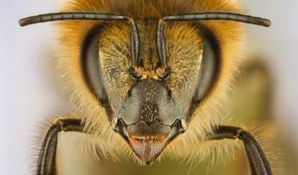 ЕС харчи 3 млн. евро, за да ни накара да ядем насекоми
