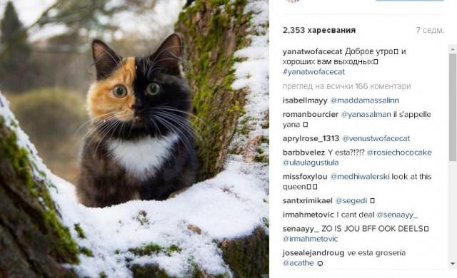 Най-уникалната котка в света е хит в Instagram