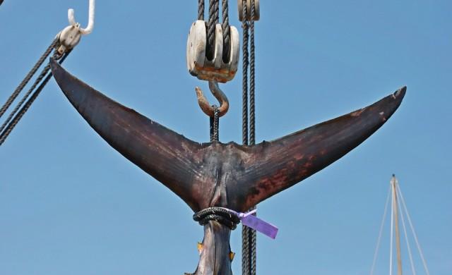 Продадоха 405-килограмова риба тон за 323 хил. долара в Токио