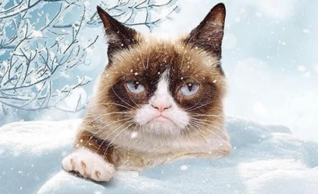 Котка спечели 700 хил. долара, въпреки това не се усмихна