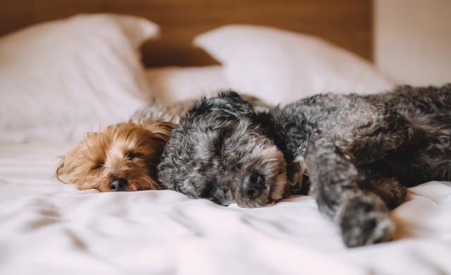Неочакваните ползи от ставането в един и същи час