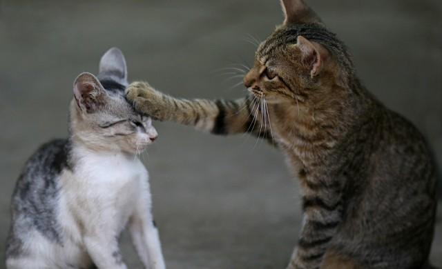 Котки живеят самостоятелно под наем срещу 1 500 долара месечно