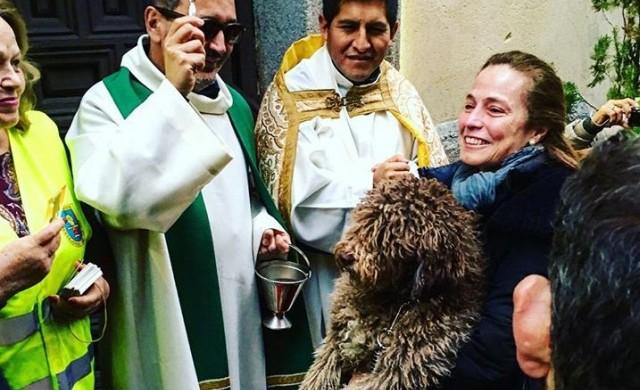 Кучета и котки получиха благословия в чест на Св. Антоний