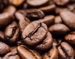 60% от дивите сортове кафе застрашени от изчезване