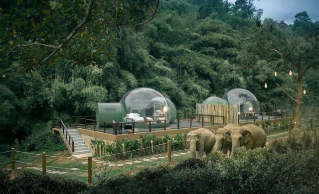 В този курорт гостите спят в прозрачни балони сред слонове
