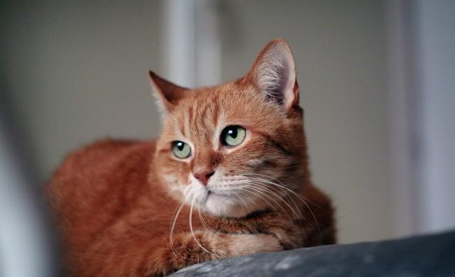 Как котките знаят колко е часът?