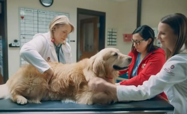 Милионер купи реклама за $6 млн. на ветеринари, спасили кучето му