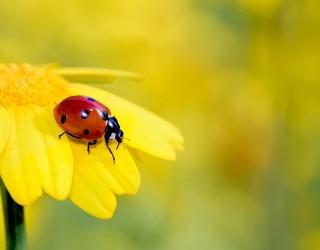 Удивителните макро снимки на любител-фотограф със смартфон