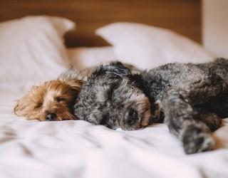 Как заспиването 30 минути по-рано влияе на тялото ви?