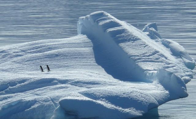 Disney пуска луксозен круиз до Антарктида