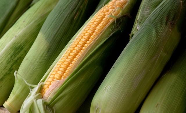 Неотслабващото търсене на царевица от страна на Китай ще повиши още цените