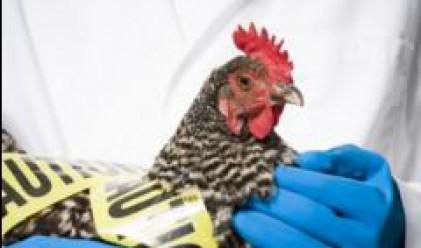 Откриват Регионална лаборатория за диагностика на птичи грип и Нюкясълска болест