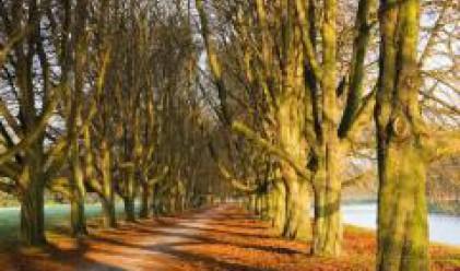 През тази година ще бъдат залесени 165 декара от горския фонд на Столичната община