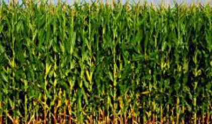 Обсъждаме вноса на 200 хил. т царевица и 50 хил. т пшеница от Украйна