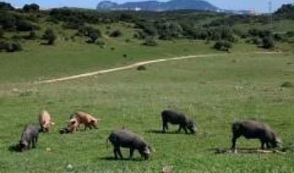 Прекратиха окончателно търговията с акциите на Свиневъдство-Преславец
