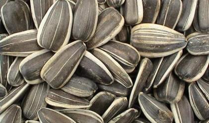 100 кг порцеланови семки, продадени за 563 800 долара