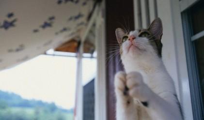 Котка заключи стопаните си на -11 градуса