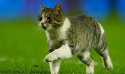 Котка на терена (видео)