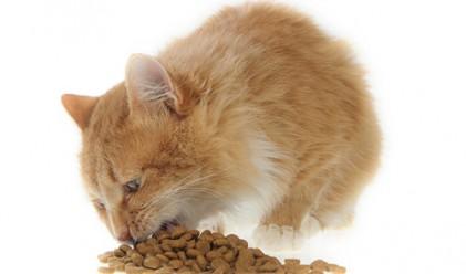 Американка яде котешка храна от 5 г.