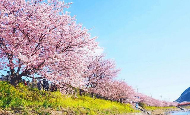Пролетта превърна малко японско градче в приказна дестинация