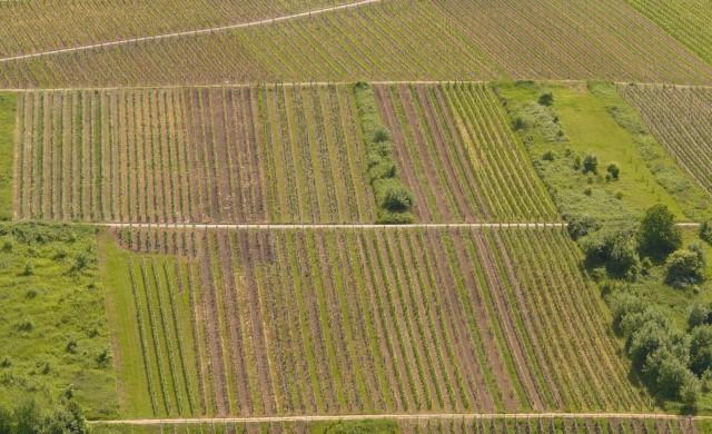 Инвеститори пренасочват парите си в земеделска земя