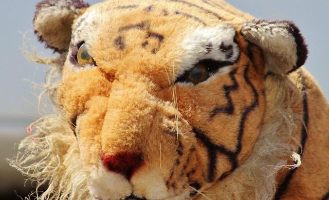 Шотландски полицаи почти час дебнат плюшен тигър (снимки)