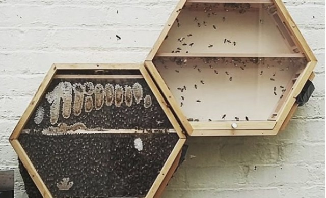 Пчелен кошер в дневната, или как да спасим планетата
