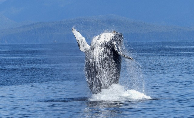 5 места, покрити с костите на най-големите животни на планетата