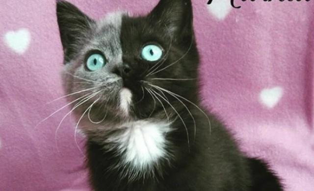 Запознайте се с Нарния - най-необикновената котка в света