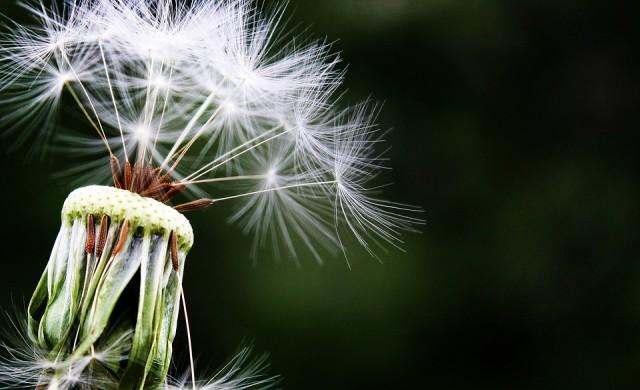 Седем начина да надвиете алергиите тази пролет