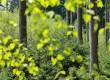 Земята се е раззеленила за 20 г., но на какво се дължи това?