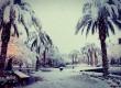 Сняг покри палмите в Лас Вегас - втори път за седмица (снимки)