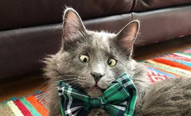 Кривогледата котка, която събира пари за животни в беда