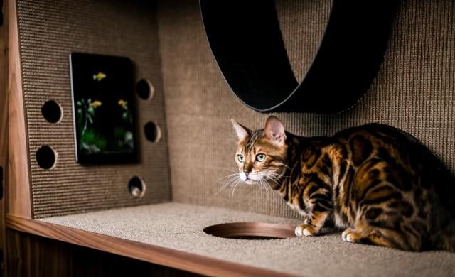 Котешки апартамент – мебел за грижовни стопани