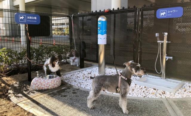 Летището, на което има специална тоалетна за кучета