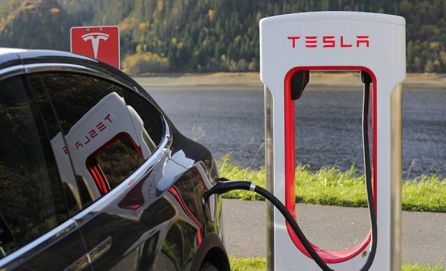 Съд нареди на Tesla да спре да изсича дървета в Германия