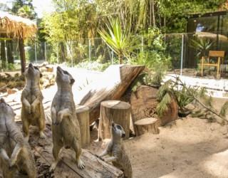 Зоопаркът също може да изкарва пари
