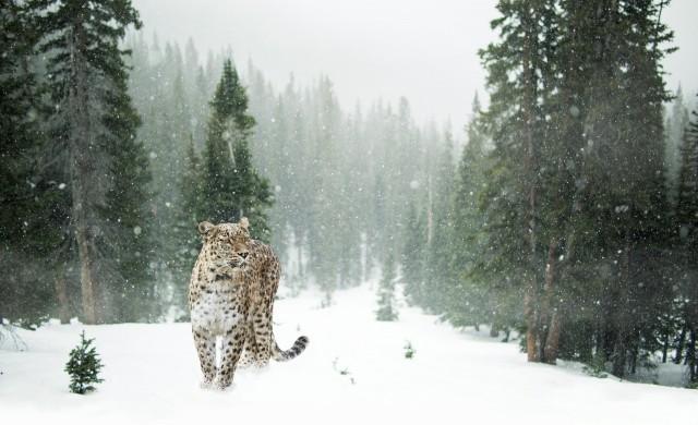 Вижте кои са едни от най-застрашените животни на планетата