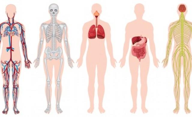 Факти за тялото, които не знаете