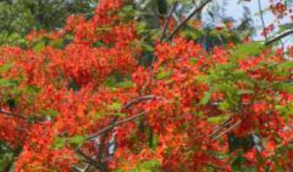 Фондация Биоразнообразие протестира срещу обявяването на Странджа за Природен парк