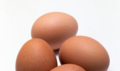 Нихат Кабил връчва утре официални свидетелства за окачествители на яйца и птиче месо